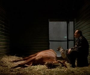 tony, his horse, and horse's goat friend image