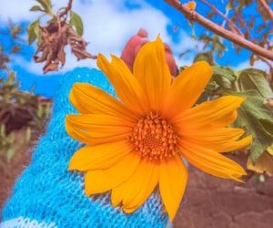 autoral, flourish, and flowers image