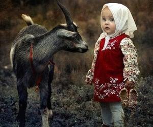 animal, photo, and traditional image