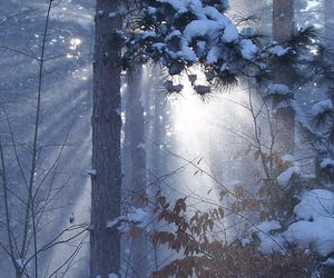 winter, forest, and trees image