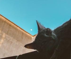 Animais, cat, and moon image