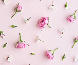 flower, pattern, and pink rose image