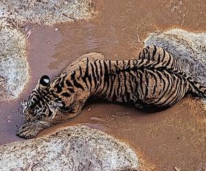 theme and tiger image