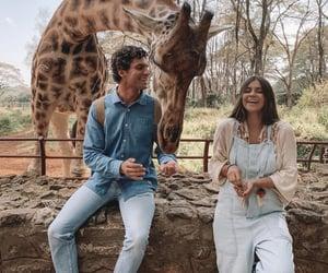 animals, couple, and giraffe image