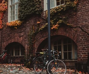 autumn, leaves, and bicycle image