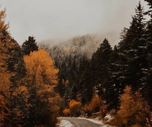 autumn, drive, and nature image