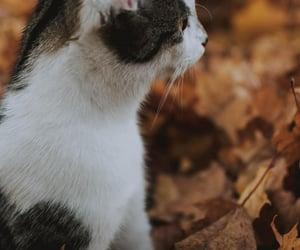 animal, animals, and autumn image