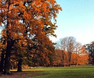 autumn, orange, and pretty image
