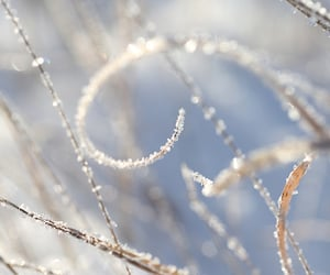 frost, closeup, and winter image