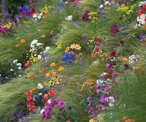 flowers, grass, and wildflowers image