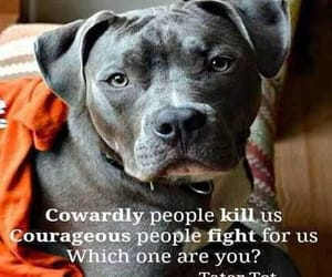pit bull and quote image