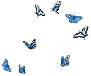 butterfly, png, and blue image
