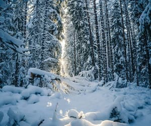 forest, landscape, and winter image