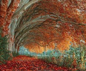 خريف, autumn, and اشجار image