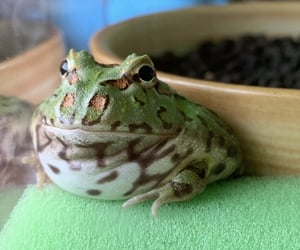 frog, cute, and dirt image