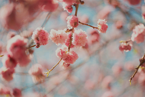 Life Looks Better In Spring