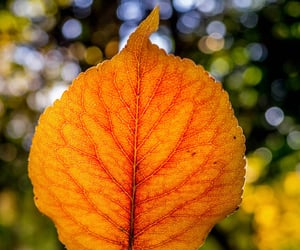 autumn, cheerful, and focus image