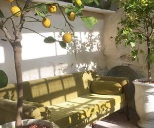 furniture, lemons, and tree image