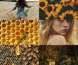 aesthetic, Moodboards, and aesthetics image