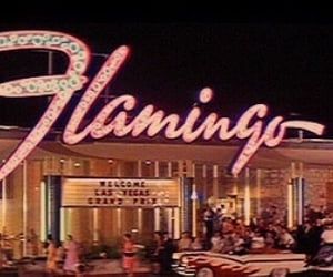 flamingo, vintage, and retro image