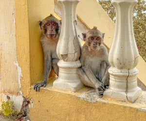 monkeys, Temple, and thailand image