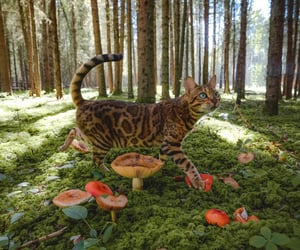 cat, animal, and forest image