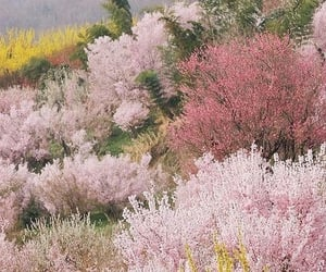 pink, nature, and wallpaper image