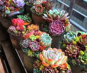 cactus, colors, and plant image