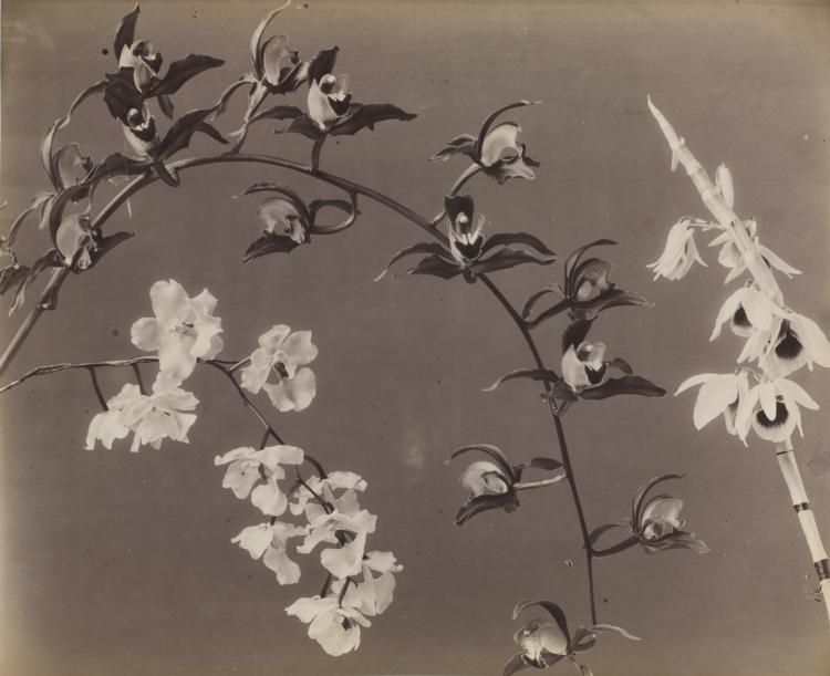 flowers, orchids, and vintage photography image