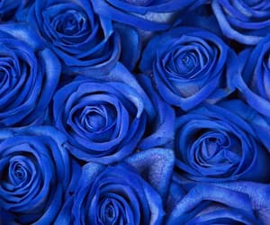 background, blue, and bouquet image