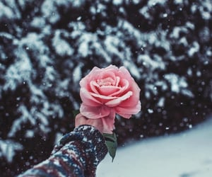 beautiful, flower, and winter image