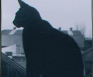 black, chat, and noir image