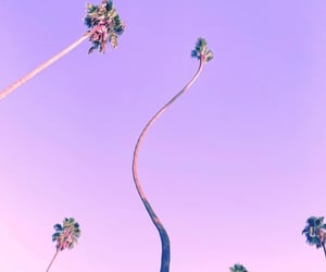 lilac, palmtrees, and pastel image