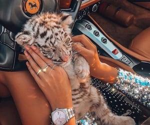 animal, luxury, and car image