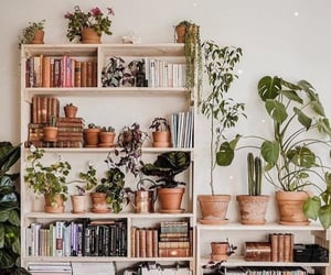 books, plants, and bookshelf image