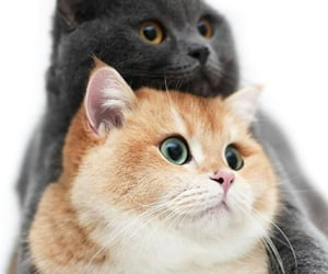animals, cats, and fun image