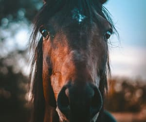 animals and horse image