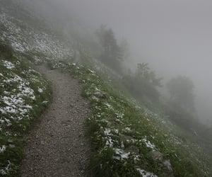 nature, fog, and foggy image