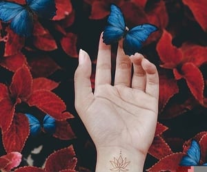 butterfly, wallpaper, and red image