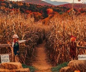 autumn, fall, and corn maze image