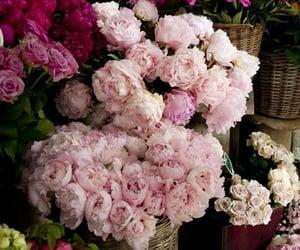 flores, naturaleza, and cestas image