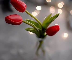 beauty, love, and bokeh image
