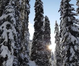 forest, inverno, and nature image