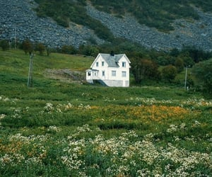 aesthetic, flowers, and hills image