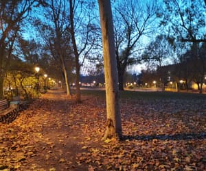 autumn, lights, and nature image