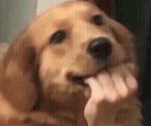 meme and dog image
