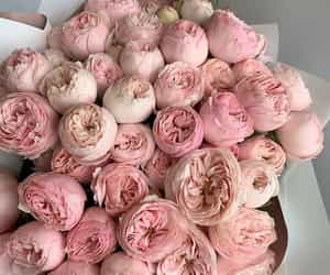 flowers, peonies, and beautiful image