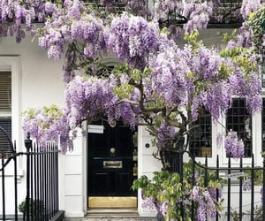 aesthetic, entrance, and floral image