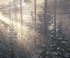 beauty, december, and winter image