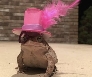 dirt, fancy, and frog image